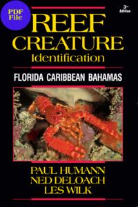 reef_creature_id_florida_caribbean_bahamas