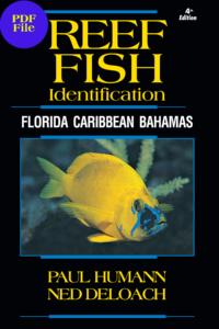 reef_fish_id_Florida_caribbean_Bahamas